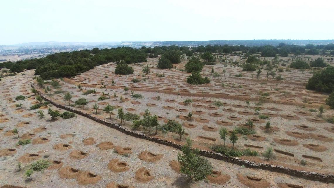 A well-prepared planting site showing different soil and water conservation structures. @ ANM, WeForest