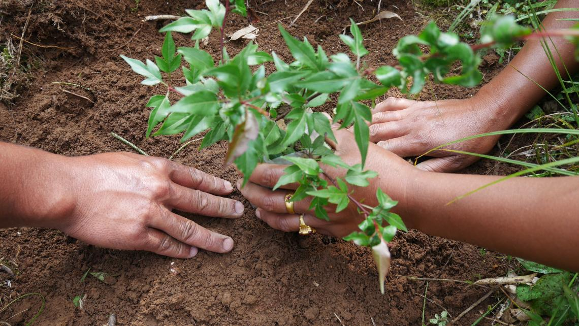 India Training and planting