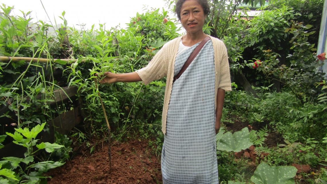India woman planting Aiphiora Khongsit Peach