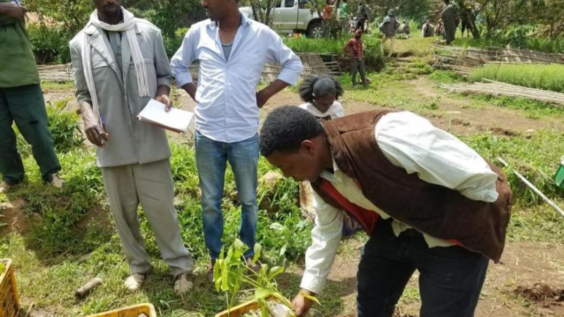 Ethiopia Tigray Tree Seedlings Planting WeForest