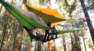 Tentsile business reforestation weforest