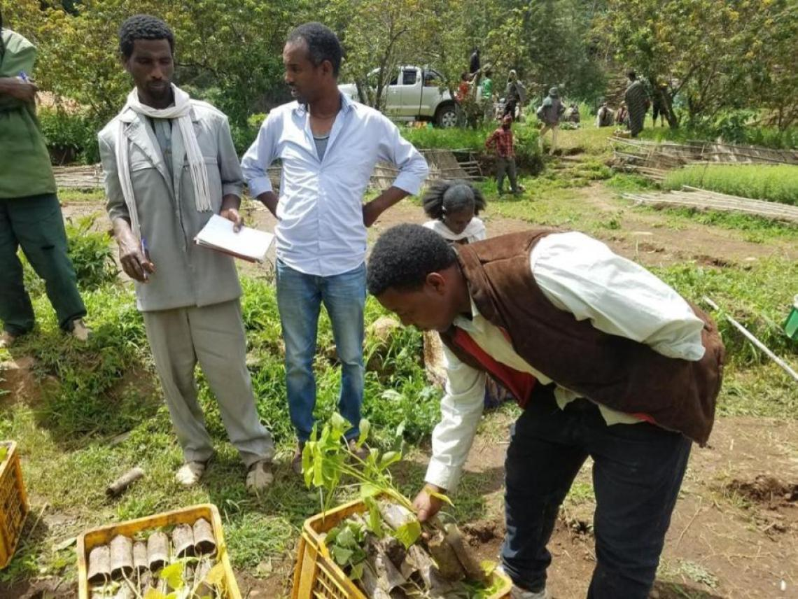 Creating jobs for local communities in forest restoration