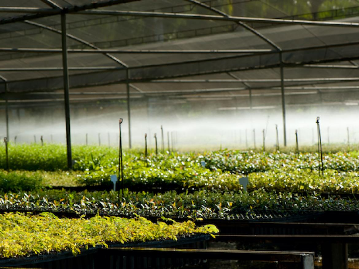 Irrigation system in the nursery